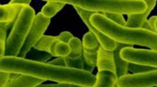 Il virus della tubercolosi