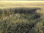 Strane scie e cerchi nel grano:|l'avvistamento Ufo nella Bassa