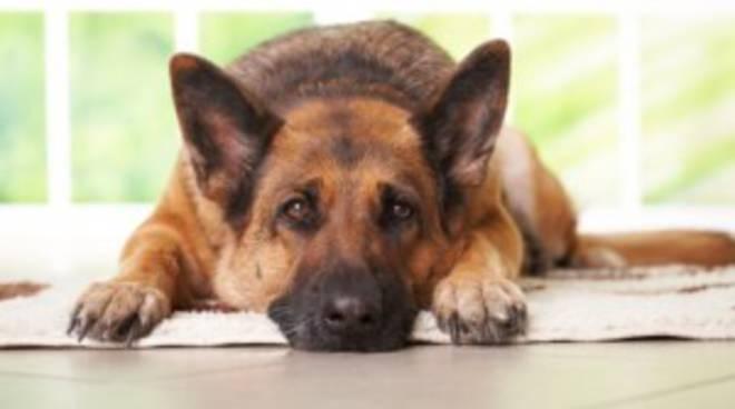 Rissa per colpa di una cane