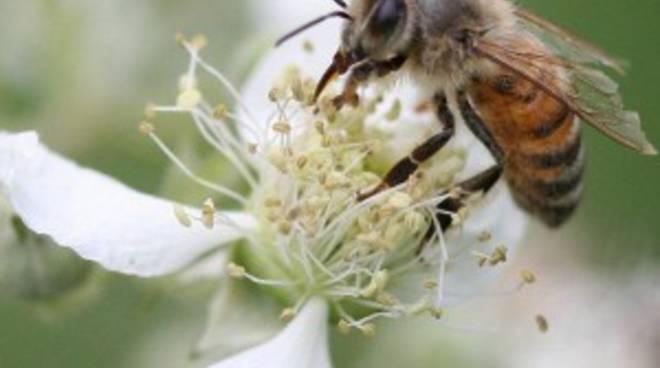 Le punture delle api hanno ucciso 68enne di Ornica