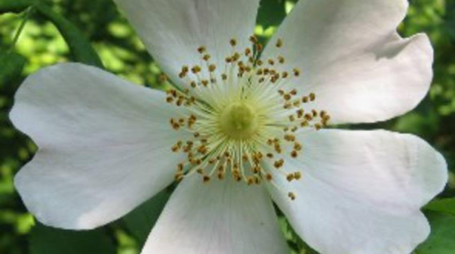 Vivaio Forestale Curno : Orto botanico un fine settimana a tutta natura bergamo news