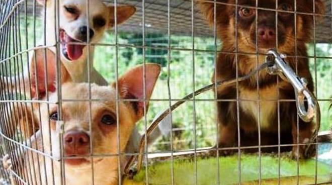 """Cani spediti come pacchi postali: è l'orrore del """"puppy mills"""""""
