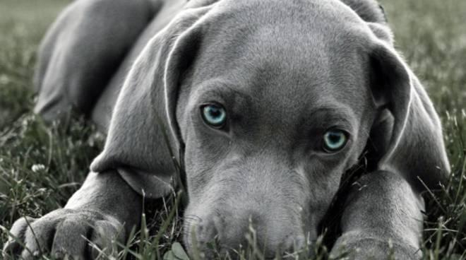 Quando I Cani Mettono La Coda Tra Le Gambe Ecco Cosa Vogliono Dirci