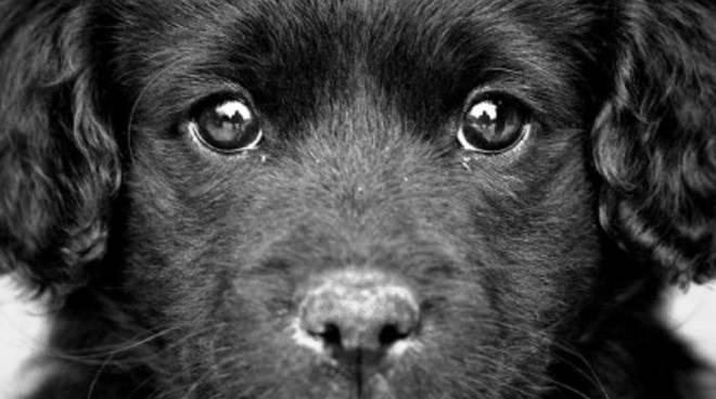 Linsostenibile Idiozia Delle Fiere Del Cucciolo Dove Il Cane è Solo