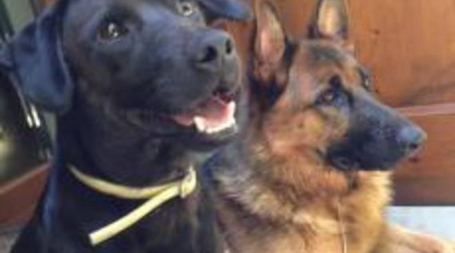 Sono tornati a casa i due cani trovati a Costa Volpino