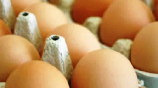 Uova contaminate da Fipronil, scatta l'allarme anche in Italia