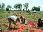 Offrono lavoro, ma anche solidarietà e sostegno all'integrazione le imprese agricole bergamasche