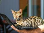 Nuova tendenza del web: i profili degli animali sui social network