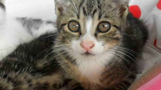 Sette gattini uccisi a Entratico