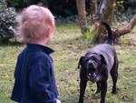 Bimbo aggredito da un cane (foto archivio)