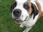 Dogalize: il social network per la vita e la salute del tuo cane