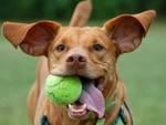 Cani in prestito: la nuova moda made in Uk