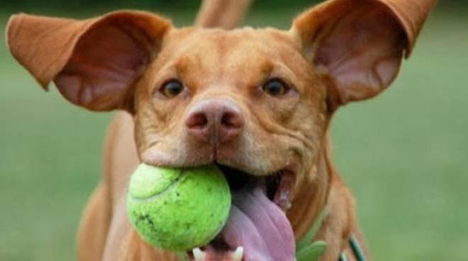 Cani presi in prestito la nuova moda dilaga su un social for Prendere in prestito denaro per costruire una casa