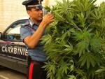 Carabiniere con marijuana