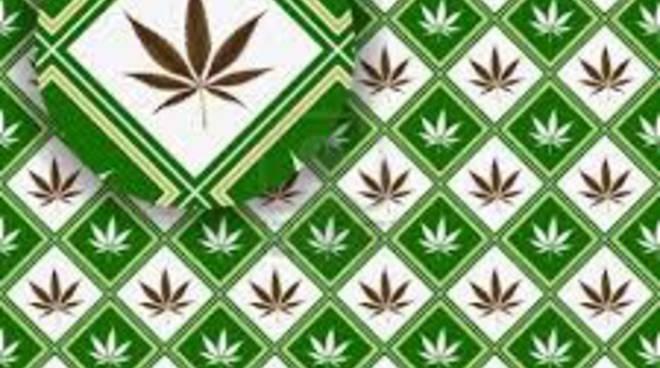Il New York Times a favore della liberalizzazione della marijuana