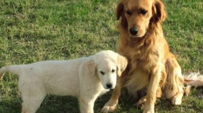 Sarnico, parchi vietati ai cani