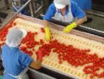 Produzione alimentare
