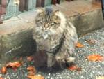 Il gatto trovato a Sorisole