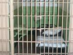 Si ammala di tumore in carcere a Bergamo
