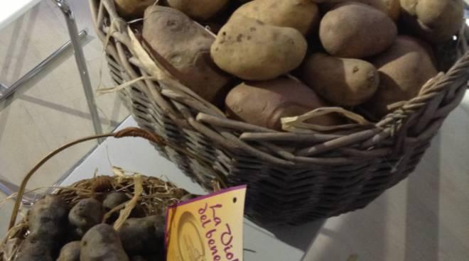 Patata di Martinengo