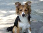 Olly, il cane smarrito