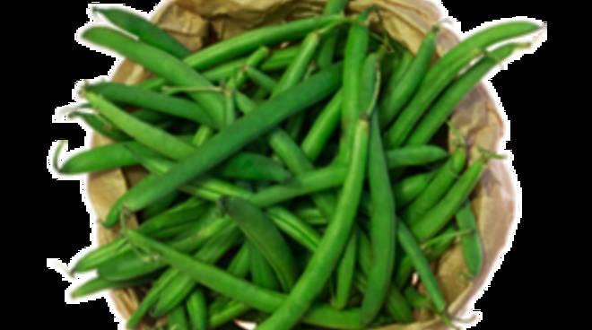Fagiolini, verdura di stagione