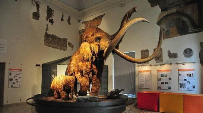 Museo Caffi
