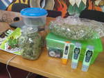 Polizia scopre serra di marijuana