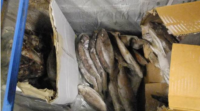 Bergamo, pesce avariato in un minimarket