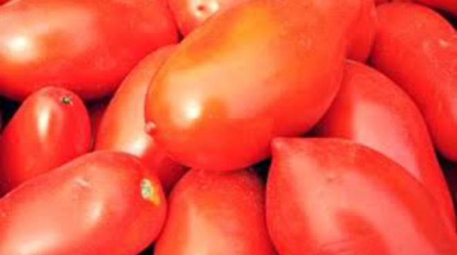 Al mercato ottimi e a buon prezzo: i pomodori