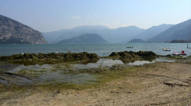 Alghe e siccità sul Sebino