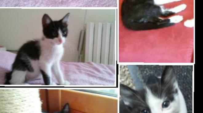 I gattini spariti e uccisi a Seriate