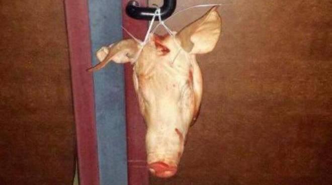Testa di maiale (foto di repertorio)