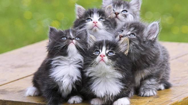 I gatti raccontano