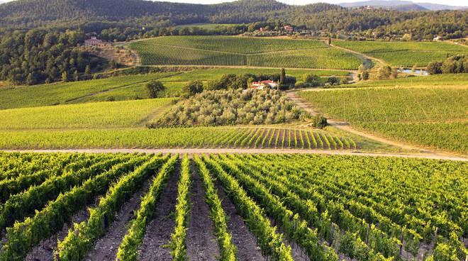 Il 2015 ottima annata per il vino