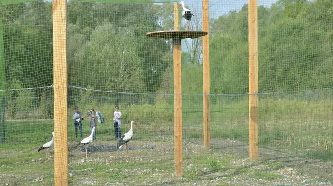 Le cicogne al Parco del Serio