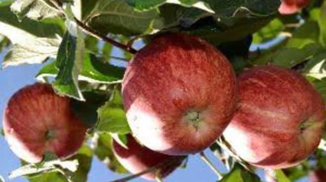 Sagra della mela a Piazza Brembana