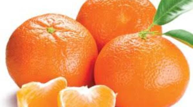 E' la stagione delle clementine