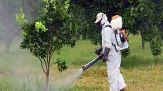 Trattamenti fitosanitari alle piante