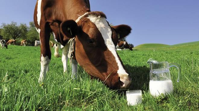 """Boom per il latte """"spot"""", Coldiretti Bergamo: """"Fissiamo il prezzo con l'industria"""""""