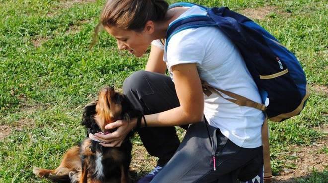 Adottare Un Cane Scelta Importante Alcuni Consigli Bergamo News