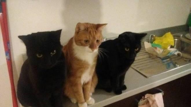 Festa dei gatti foto