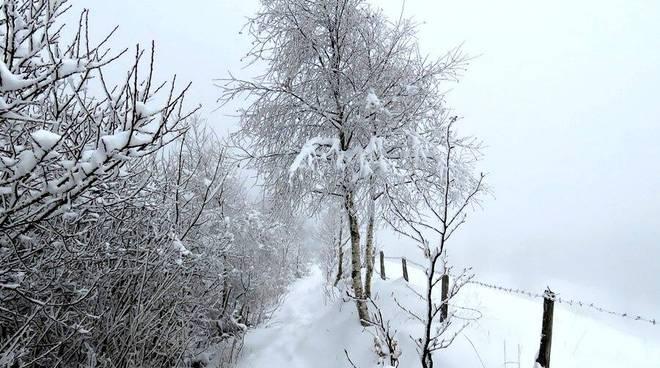 Neve a Tegge di Foppolo