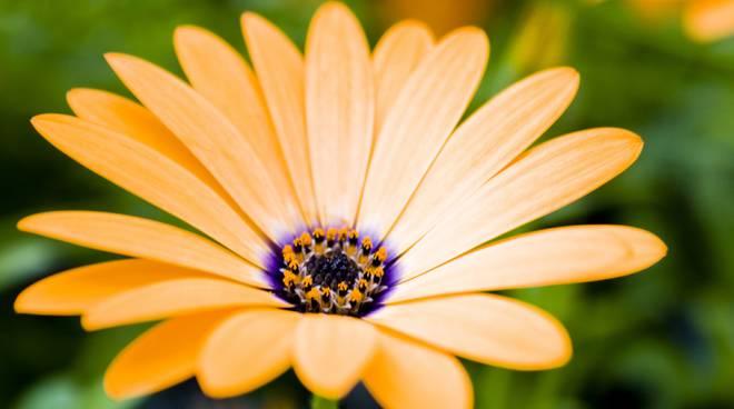 Comè un fiore?