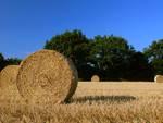 Distretto agricolo