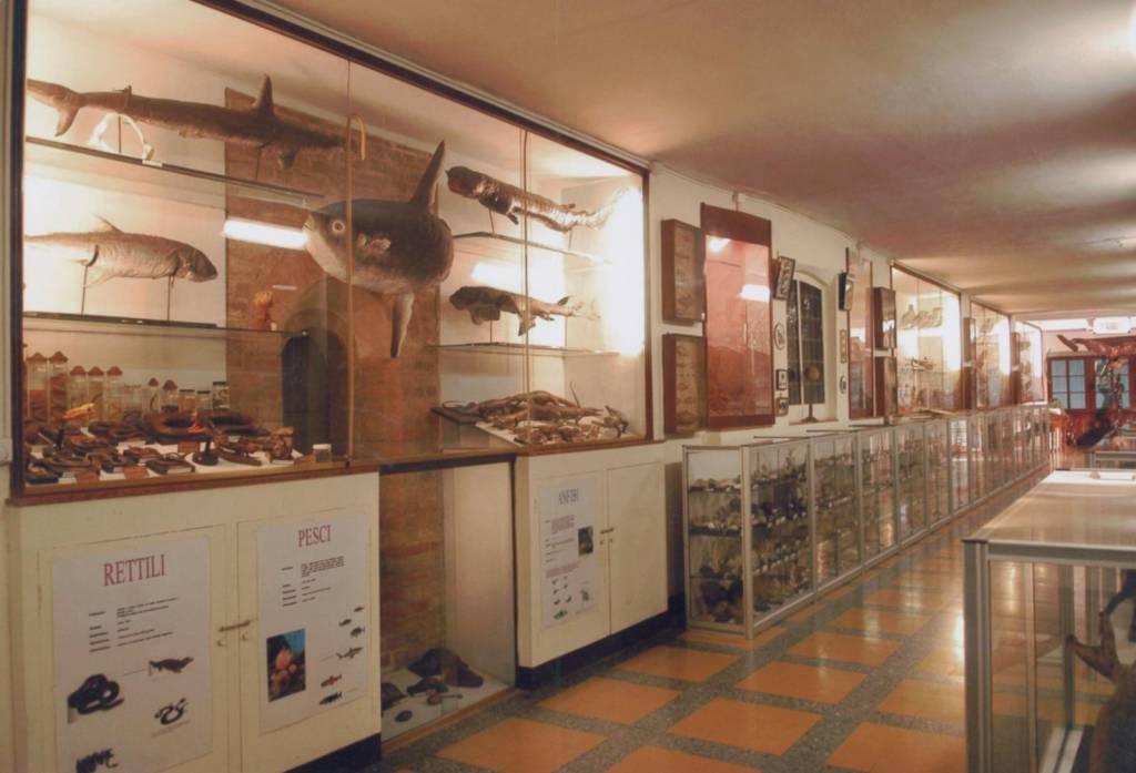 Musei civici 2