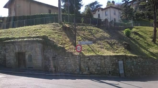 Castagni in via Scalvini