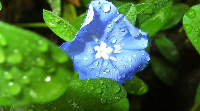piove primavera