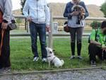 Sarnico dog friendly