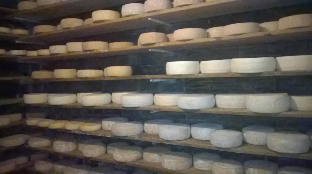 bossico formaggi
